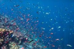 Couleurs de poissons Images libres de droits