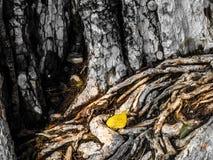 Couleurs de racine et de feuilles de nature Images libres de droits