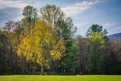 Couleurs de ressort sur des arbres en vallée de Shenandoah rurale de Virgini Photo libre de droits