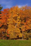 Couleurs de saison d'automne Photo stock