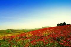 Couleurs de source, horizontal de pairie de fleurs sauvages Photographie stock libre de droits