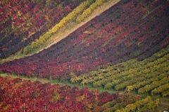 Couleurs de vigne en automne Images stock