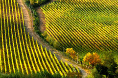 Couleurs de Wineyards en Toscane, chianti, Italie photographie stock