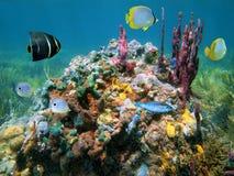 Couleurs des éponges de mer Images stock