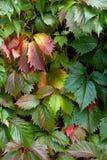 Couleurs des automnes Image libre de droits