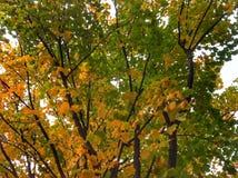 Couleurs lumineuses d'automne Photo libre de droits