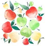 Couleurs mûres juteuses de pommes jaune rouge et vert et croquis différent d'aquarelle de tailles Image stock