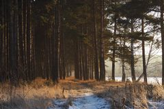 Couleurs magiques de la forêt d'hiver de soirée photos stock