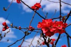 couleurs merveilleuses Photos stock