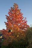 Couleurs oranges d'automne Image stock