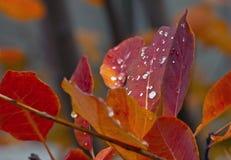 Couleurs oranges d'or d'automne avec la pluie Image stock
