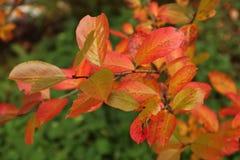 Couleurs rouges d'automne Photographie stock libre de droits