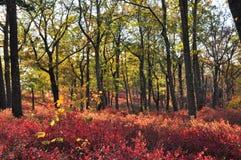 Couleurs rouges et jaunes de feuillage sur des collines de New Jersey au coucher du soleil Image libre de droits
