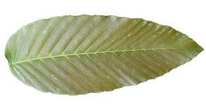 Couleurs tropicales m?lang?es vertes de feuilles de Brown d'isolement sur les milieux blancs photographie stock libre de droits
