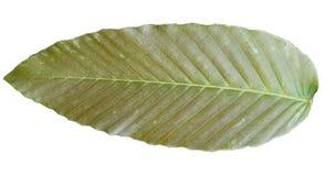 Couleurs tropicales m?lang?es vertes de feuilles de Brown d'isolement sur les milieux blancs photos libres de droits