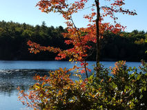 Couleurs vibrantes d'automne de New Hampshire Photographie stock libre de droits