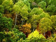 Couleurs vives d'automne Photos stock