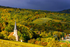 Couleurs vives des vignobles d'automne dans Andlau, Alsace Photos libres de droits