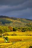 Couleurs vives des vignobles d'automne dans Andlau, Alsace Images libres de droits