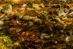 Coulez cascader doucement en bas d'une forêt de montagne avec de petites cascades dans le premier plan et fougère verte fraîche à photo stock