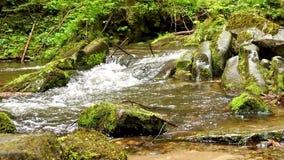 Coulez, crique dans les montagnes, le ressort, mousse verte sur des pierres, l'eau circulant sur des rochers banque de vidéos