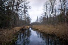 Coulez dans la forêt en automne en retard, région de Kemeri Photos stock