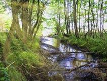 Coulez dans la forêt sauvage - parc national de Slowinski, Kaszuby, Pomorskie, Pologne Photo stock