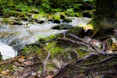 Coulez en parc naturel de Vysoke Tatry, troisièmement image libre de droits