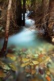 Coulez par des arbres Photographie stock