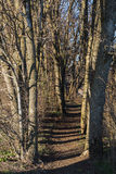 Couloir sec d'arbres Photos libres de droits