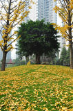 Coulorful Autumn/Fall park. The park is in autumn/fall with coulorful leaves Royalty Free Stock Images