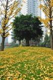 Coulorful jesieni, spadku park/ obrazy royalty free