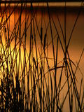 Coulours do por do sol Fotografia de Stock