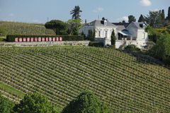 Couly Dutheil Vineyard. Chinon. France Stock Photography