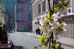 Council Square. Main street in Brasov City during spring Stock Photos