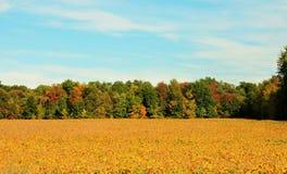 Counrty-Feld mit Andeutungen des Herbstes stockbilder
