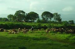 Counrtyside-Bauernhoflandschaft-cc$ii Stockfotos