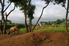 Counrtyside lantgårdlandskap Arkivfoton