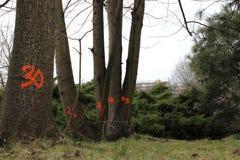 Count-down auf den Bäumen Lizenzfreies Stockfoto