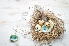 Countdown days to leave the nest stock photo