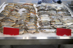 Counter fish store. Royalty Free Stock Photo