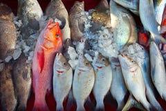 counter fiskmarknad Arkivbilder