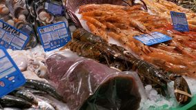 Counter with Fresh Various Exotic Seafood in La Boqueria Market. Barcelona. Spain. Sea food and fish market. Showcase with Seafood in La Boqueria Fish Market stock video footage