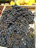 Counter the fruit market. Royalty Free Stock Photos