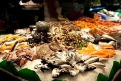 The counter on the market, seafood on ice, mussels,salmon, snapper. The Boqueria Market in Barcelona, Spain. royalty free stock photo