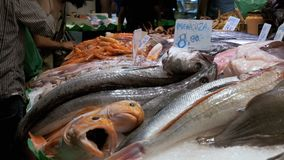 Counter with Seafood in Ice at La Boqueria Fish Market. Barcelona. Spain. Showcase with various exotic seafood, fish, crabs, clams, shrimps and more. Seller stock video footage