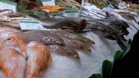Counter with Seafood in La Boqueria Fish Market. Barcelona. Spain. Counter with various exotic seafood, fish, crabs, clams, shrimps and more. Sea food and fish stock footage