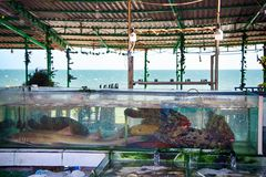 Counter Vietnamese cafe with aquariums with fish stock photo
