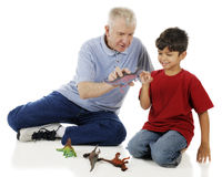 Counting Dinosaur Teeth Stock Image