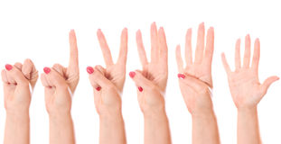 Counting hands (0 to 5) Royalty Free Stock Images